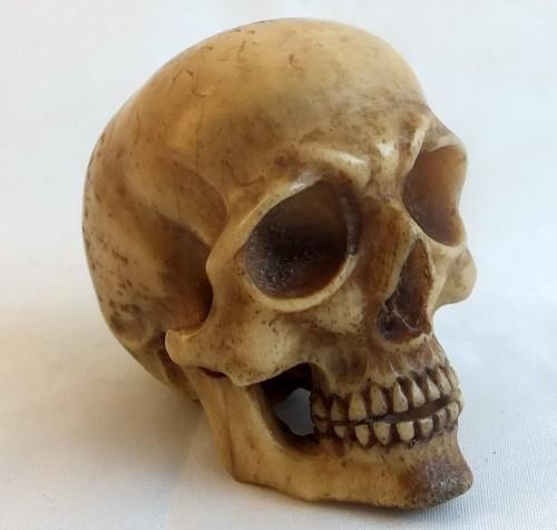 Stag antler skull